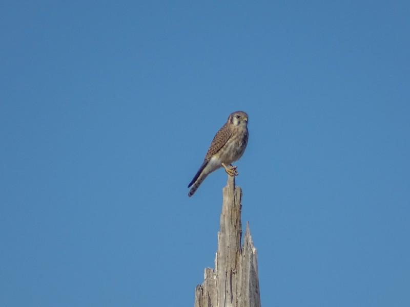 Bosque del Apache NWR, Socorro NM