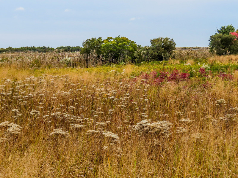 The Meadow, Cape May NJ