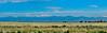 Front Range behind Denver Skyline, Denver CO