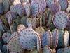 Desert Botanical Gardens, Phoenix AZ, 12/09