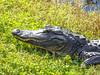 Shark Valley, Everglades National Park
