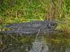 Anhinga Trail, Everglades National Park, Homestead FL