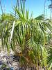 National Key Deer Santuary, Big Pine Key, Florida Keys