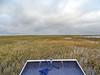 Everglades Wildlife Management Area, Miami FL