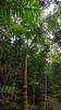 Royal Palms, Everglades National Park, FL