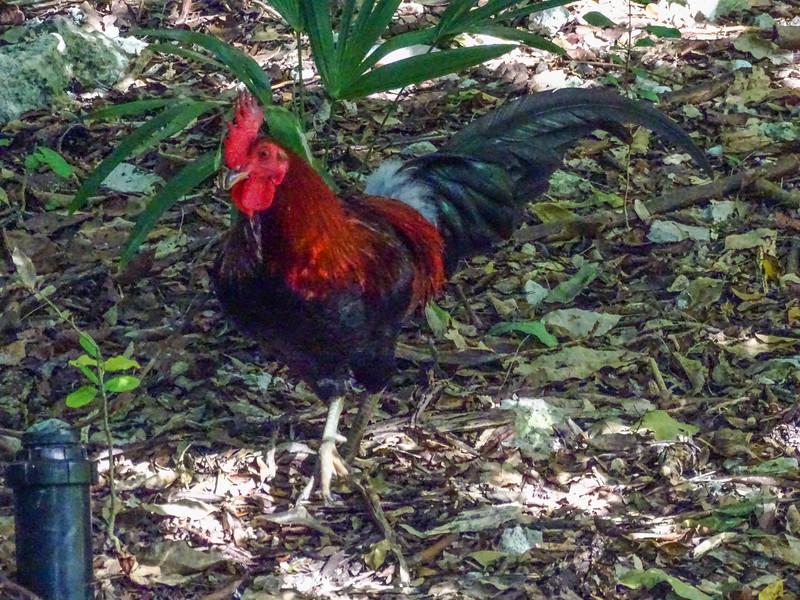 Key West Botanical Garden, Key West, Florida Keys