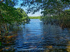 Flamingo Area, Everglades National Park, FL