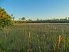 Big Cypress National Preserve, FL