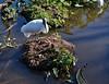 Gatorland, Orlando FL