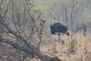 Ostrich, Kruger National Park, South Africa