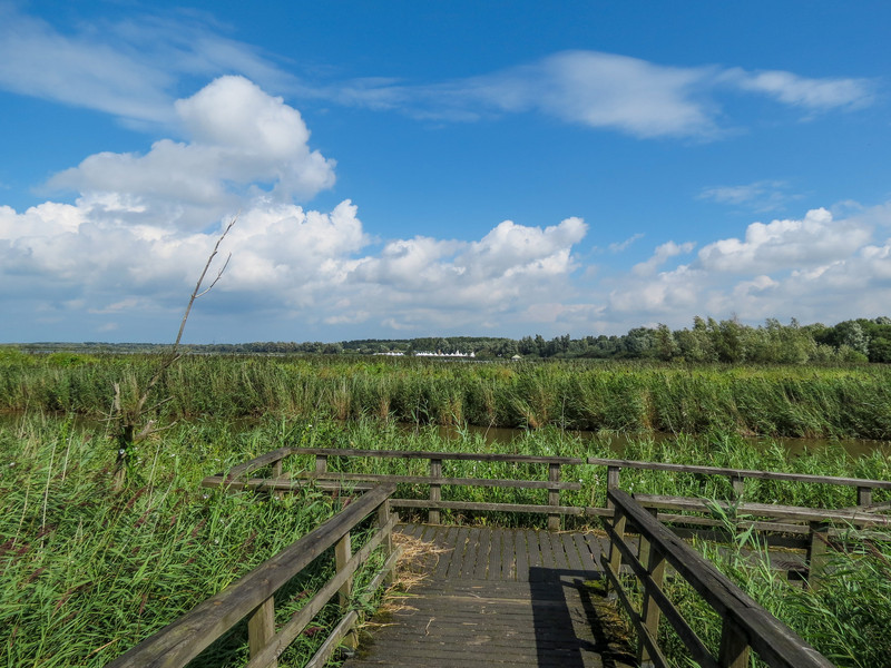 the Oostvaardersplassen in Lelystad, The Netherlands
