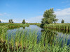 the Oostvaardersplassen in Lelystad, The Netherlands
