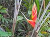 Flower, The Lodge at Pico Bonito, Honduras