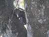 Squirrel, Parque Arqueológico Los Naranjos.