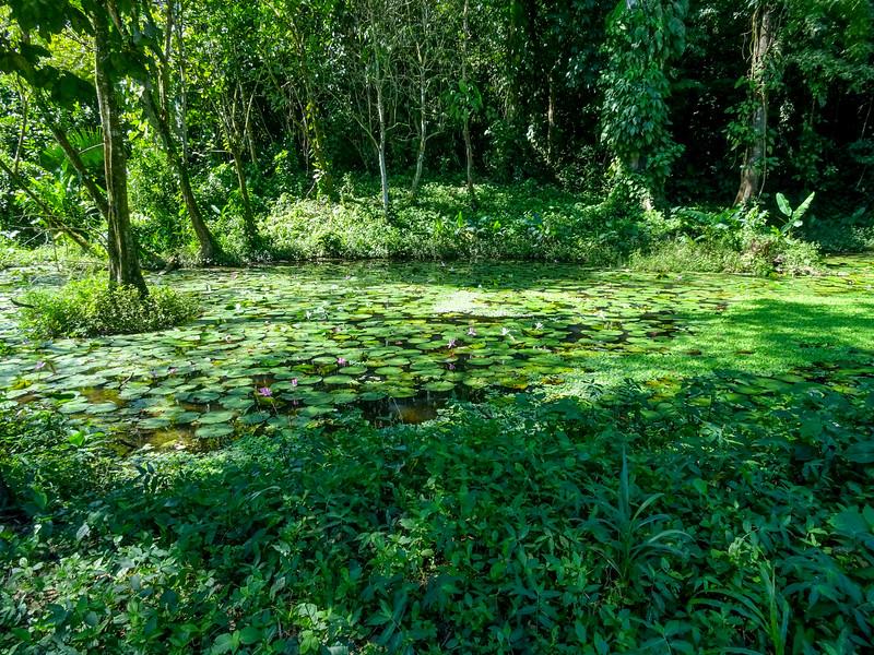 Lancetilla Botanical Gardens, Honduras