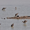 Ruff and Wood Sandpiper??