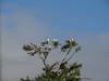 Wood Storks and Egrets, Honduran Emerald Reserve Trip, Lodge at Pico Bonito