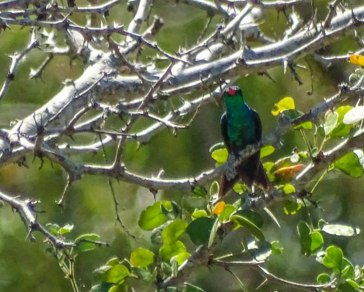 Savin's Emerald, Honduran Emerald Reserve Trip, Lodge at Pico Bonito