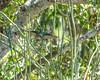 Honduran Emerald, Honduran Emerald Reserve Trip, Lodge at Pico Bonito