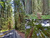 Arcata CA and the Redwoods