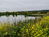 Arcata Marsh, Arcata CA
