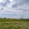 Carrington, North Dakota June 2008