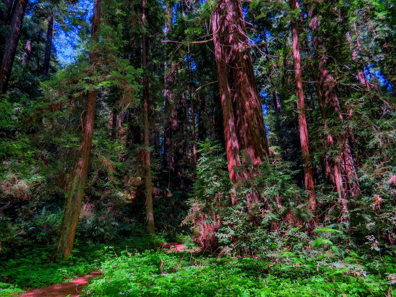 Humboldt Redwoods State Park, Avenue of the Giants. CA HDR