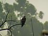 Osprey, San Joaquin Wildlife Sanctuary, Irvine CA