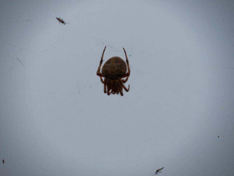 Spider, San Joaquin Wildlife Sanctuary, Irvine CA