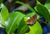butterfly, Cuero y Salada WR