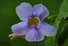 flower, Cuero y Salada WR VC