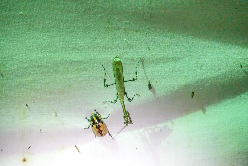 bugs, The Lodge at Pico Bonito