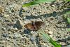 butterfly? Lancetilla Botanical Gardens, Tela Honduras