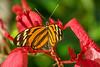butterfly? The Lodge at Pico Bonito, Honduras