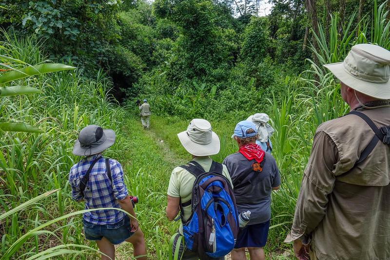 watching for Ruddy Crake, Lancetilla Botanical Gardens, Tela Honduras