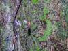 Golden Orb-weaver Spider, Popa Island, Panama