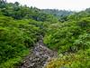 Reserva Forestal De Fortuna, Panama