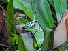 Green Acres Chocolate Farm, Bocas del Toro, Panama