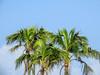 Bird Islands, Bocas del Toro Province, Panama