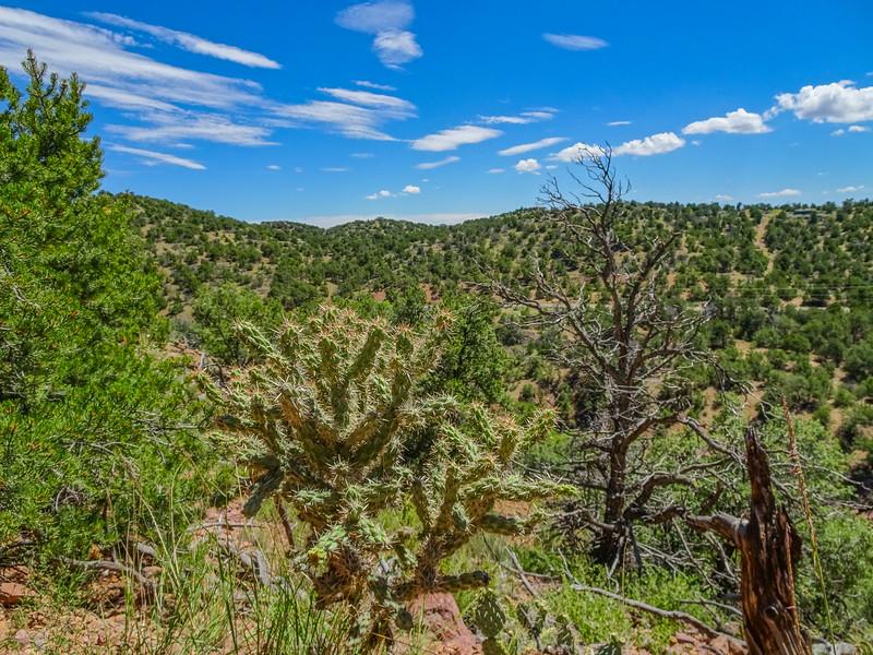 Aroyo Hondo Open Space, Santa Fe, NM