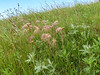Prairie Smoke, School Sections, Medina ND
