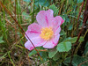 Prairie Rose, School Sections, Medina ND