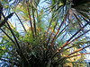 Sabal Palm Santuary, Brownsville TX