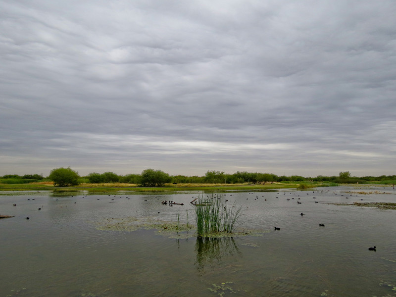 Estero Llano Grande World Birding Center, Weslaco, TX