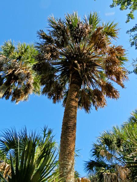 Sabal Palm Santuary, Brownsville TX