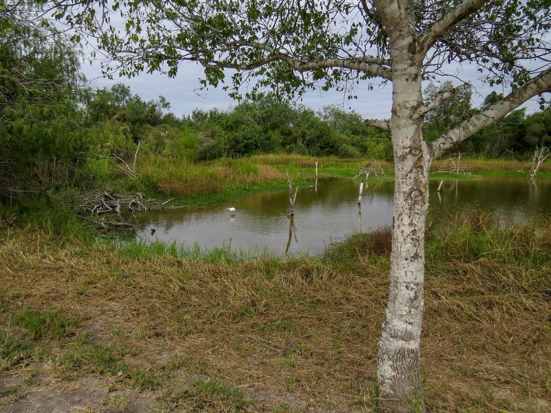 Estero Llano Grande World Birding Center, Weslaco TX