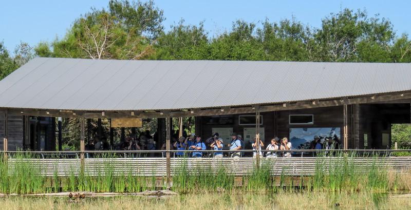 Estero Llano Grande SP / World Birding Center, Weslaco TX