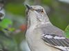 Bentsen State Park World Birding Center VC, Mission TX