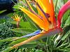 Bird of Paradise, Mission Bay, San Diego CA