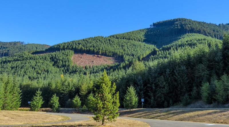 Mt. Rainier Vista, WA